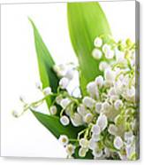 Lily Of The Valley Art Canvas Print