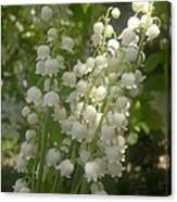 White Lily Of The Valley Bouquet Canvas Print