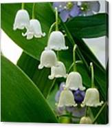 Lily Of The Valley Green Canvas Print