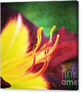 Lily On Vintage Canvas Print
