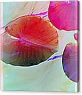 Lily Pad 1 Canvas Print