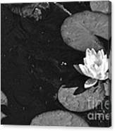 Lily Pad In Bloom Canvas Print