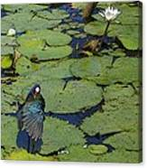 Lily Pad With Bird2 Canvas Print