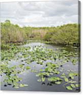 Lily Pads Floating On Water, Anhinga Canvas Print