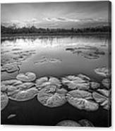 Lily Pads In The Glades Black And White Canvas Print