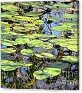 Lily Pads In The Swamp Canvas Print