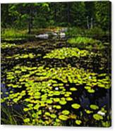 Lily Pads On Lake Canvas Print