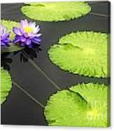Lily Pads Purple Canvas Print