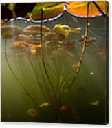 Lily Pads Underwater Canvas Print