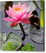 Lily Pink Canvas Print