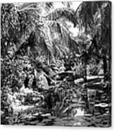 Lily Pond Bw Canvas Print