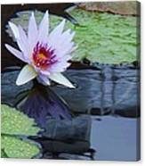 Lily Purple And White Canvas Print