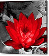 Lily Red And Koi Canvas Print