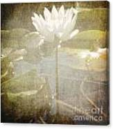Lily Reflections Canvas Print