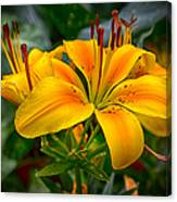 Lily Sunshine Canvas Print
