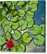 Pacman Lily  Canvas Print