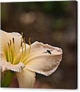 Lily With Fly Canvas Print