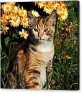 Lily With Harvest Mums Canvas Print
