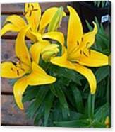 Lily Yellow Flower Canvas Print