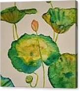 Lilypads 1 Canvas Print