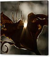 Lily's Light Canvas Print