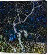 Limned Desert Tree Canvas Print
