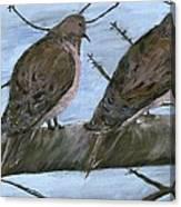Limbirds Canvas Print