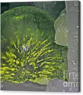 Limon Arcs Canvas Print