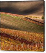 Line And Vine Canvas Print