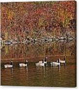 Line Of Geese On The Quinapoxet River Canvas Print