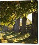 Line Of Maple Trees Along Rural Road In Canvas Print