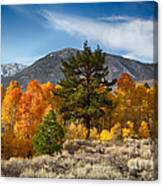 Line Of Trees At Lake Lundy Canvas Print