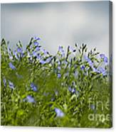 Linseed Canvas Print