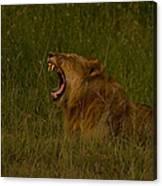 Lion   #1050 Canvas Print