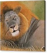 Lion At Rest Canvas Print