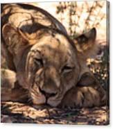 Lion Close Up Canvas Print