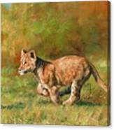 Lion Cub Running Canvas Print