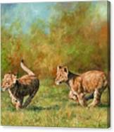 Lion Cubs Running Canvas Print