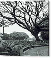 Lion Dog And Tree - Liliuokalani Park - Hawaii Canvas Print
