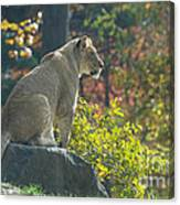 Lion In Autumn Canvas Print