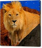 Lion In The Evening Canvas Print