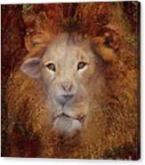 Lion Lamb Face Canvas Print