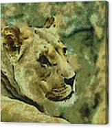 Lion Looking Back Canvas Print