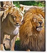 Lion Mates Canvas Print