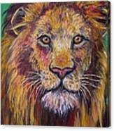 Lion Stare Canvas Print
