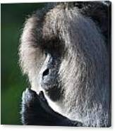 Lion Tailed Macaque Canvas Print