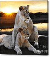 Lioness Protector Canvas Print