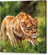 Lioness Stalking Canvas Print