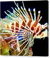 Lionfish 1 Canvas Print