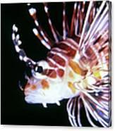 Lionfish 3 Canvas Print